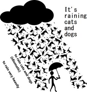 rainstorm-156134_960_720